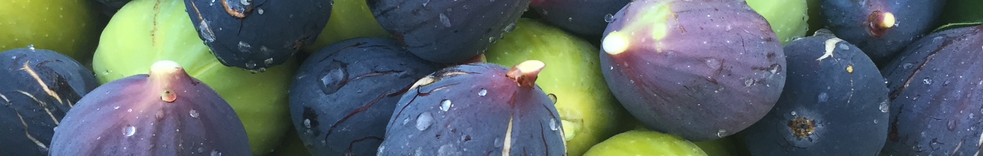 ¨organic & plant based cuisine ¨